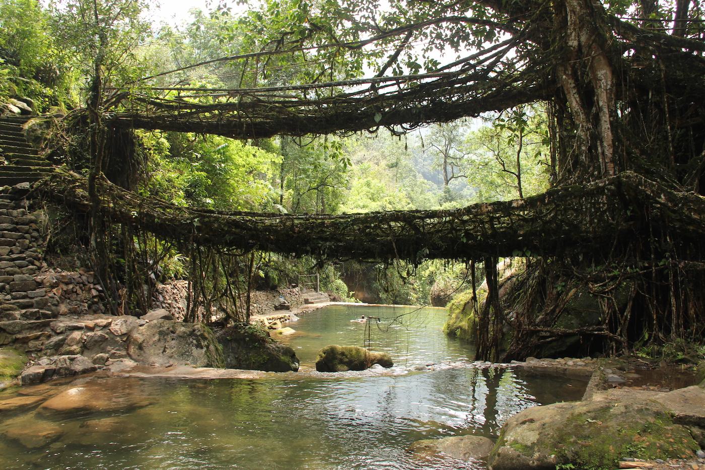 Living Root Bridges, Nongriat village, Meghalaya