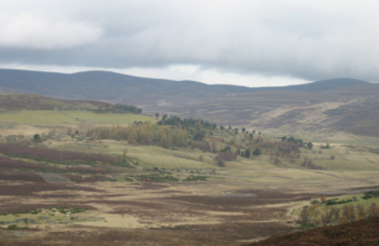 Scottish Land