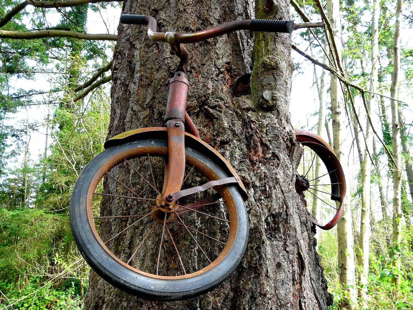 Bike Tree, Vashon Island, India