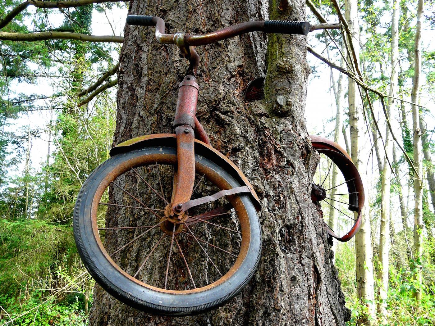 Bike Tree, Vashon Island, India