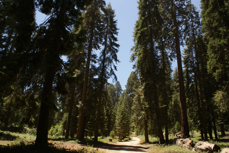 Balch Park, Sequoia National Park, California True Detective season 2 filming locations