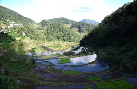 Banaue Rice Terraces View