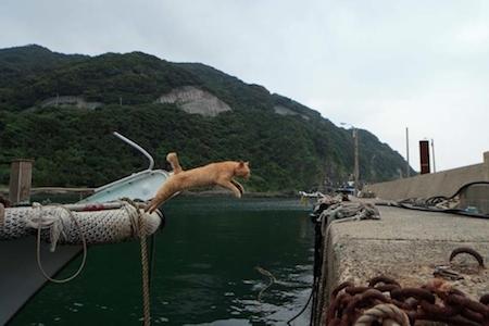 Cat Island, Ainoshima (Fukuoka), Japan