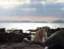 Discover Tashirojima & Ainoshima, Japan's amazing 'Cat Islands'