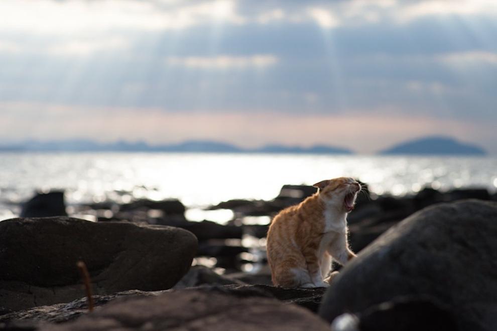 Welcome To Tashirojima Amp Ainoshima Japan S Amazing Cat