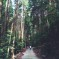 Cypress forest, Izu Peninsula, Japan