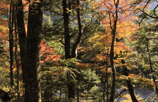 Autumnal foliage in Kamikochi, Japan