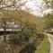 Philosopher's Walk Kyoto Japan