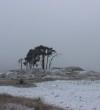 Stunning photos of Hoge Veluwe National Park in Winter