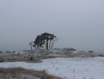 Stunning photos of Hoge Veluwe National Park in Winter