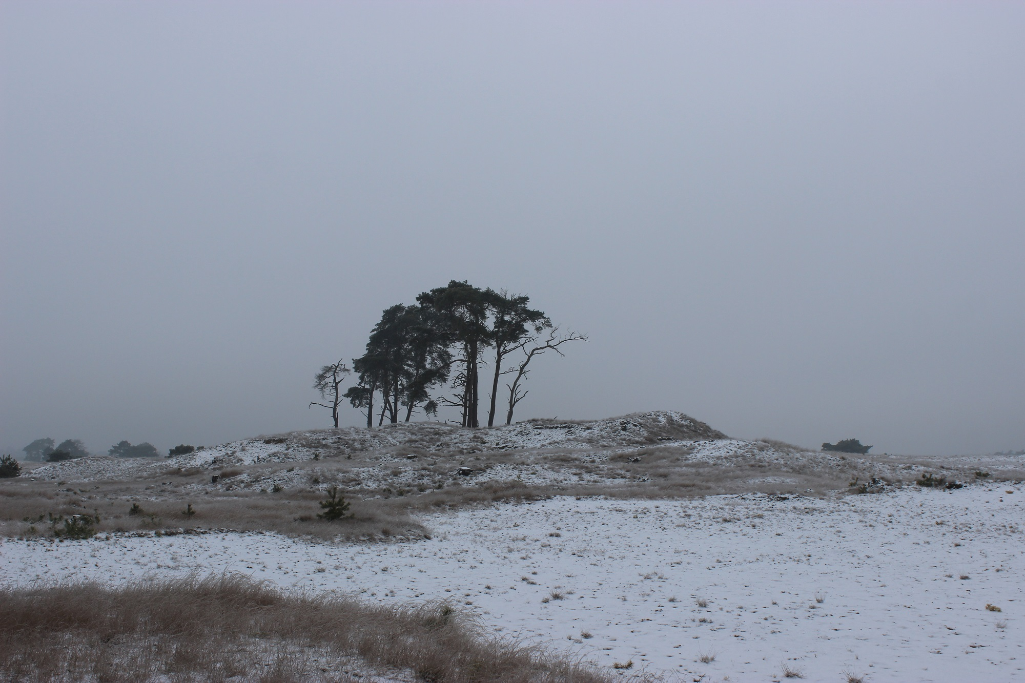 Hoge Veluwe National Park in Winter