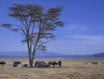 Kenya Safari in National Parks (5 days) [sponsored]