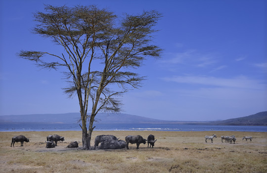 Kenya Safari in National Parks (5 days) [sponsored]