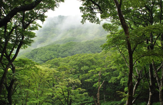 Mount Amagi, Izu Peninsula, Japan