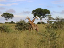 Uganda Tourism: Explore the Pearl of Africa in 2 weeks