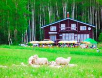 Is Bifuka the fictional Hokkaido town of Junitaki in Haruki Murakami's A Wild Sheep Chase?