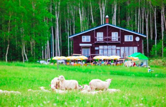 Sheep farm Bifuka Niupu Hokkaido Japan Junitaki A Wild Sheep Chase Haruki Murakami