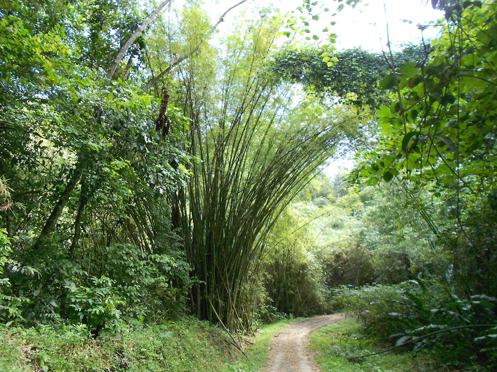 Hiking Paria Bay, Jungle - Trinidad and Tobago